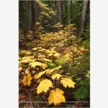 Wenatchee National Forest 2, Washington