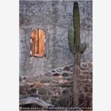 Lone Cactus, Baja, Mexico