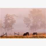 Morning Graze Stock Image