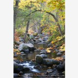 Ashland Creek In Fall Stock Image, Lithia Park, Ashland