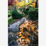 Japanese Garden Reflecting Pool Stock Image, Ashland, Oregon
