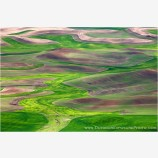Palouse In Spring Stock Image, Spokane, Washington