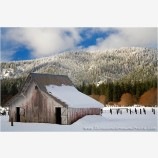 End Of Winter Barn Stock Image, Mt. Shasta, California