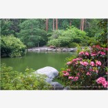 Rhododendrons Blooming At The Upper Duck Pond Stock Image, Lithia Park, Oregon