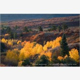Aspen and Oak Stock Image, San Juan Mountains, Colorado