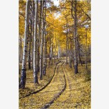 Aspen Road II Stock Image, Telluride, Colorado
