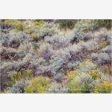 Sage Land Stock Image Zion National Park, Utah