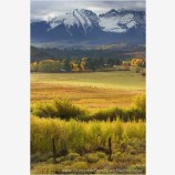 Pastureland on the Dallas Divide Stock Image, San Juan Mountains, Colorado