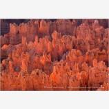 Glowing Hoodoos in Bryce Canyon Stock Image Utah