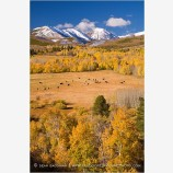Fall Pasture in the Sierra Stock Image