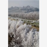 Frosty Vineyard 2 Stock Image Rogue Valley, Oregon