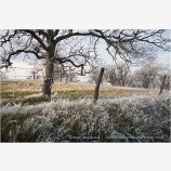 Frosted Pasture Stock Image Rogue Valley, Oregon