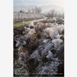 Orchard Frost Stock Image Rogue Valley, Oregon