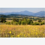 Rogue Valley 2 Stock Image,