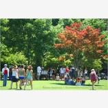 Lithia Park 1 Stock Image,
