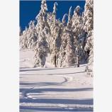 Ski Tracks Stock Image,