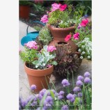 Potted Plants 1 Stock Image,