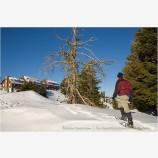 Snowshoeing 5 Stock Image,