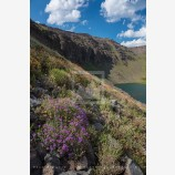 Wildhorse Lake 4 Stock Image, Steens Mountain, Oregon