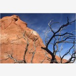 Slick Rock and Snag Stock Image, Arches National Park, Utah