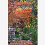 Japanese Garden Fall Stock Image Lithia Park, Ashland, Oregon
