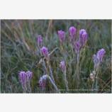 Summer Frost Stock Image, Yosemite, California