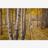 Aspen Road Print, Telluride, Colorado
