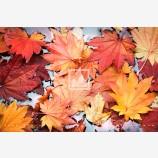 Fall's Facade Print
