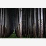 Future Forest Print, Columbia River, Oregon