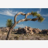 Joshua Tree Desertscape 5 Stock Image, Joshua Tree National Park, California