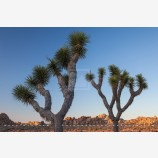 Joshua Tree Desertscape 7 Stock Image, Joshua Tree National Park, California