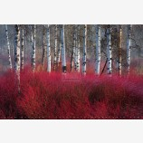 Red Willow Sea Print, Klamath Falls, Oregon
