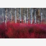Red Willow Sea Print, Klamath Falls, Oregon