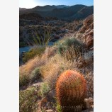 Barrel Cactus, Joshua Tree, California