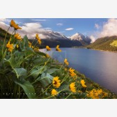 Wallowa Lake Balsam Root Print, Joseph, Oregon